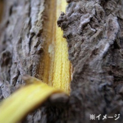 黃柏樹皮萃取菁華