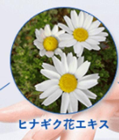 ヒナギク花エキス