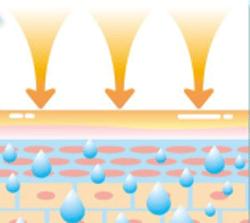 肌の保湿力を持続する