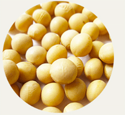 グラマラス美神PREMIUMに含まれている成分の大豆イソフラボン
