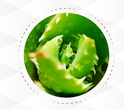 ホワイピュア薬用美白クリームの保湿成分