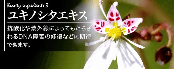 ユキノシタエキスの効果について